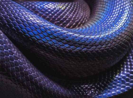 Rêver de serpent signification