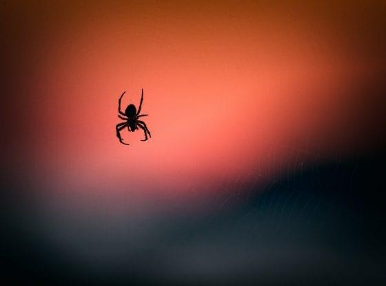 Rêver d'araignée signification