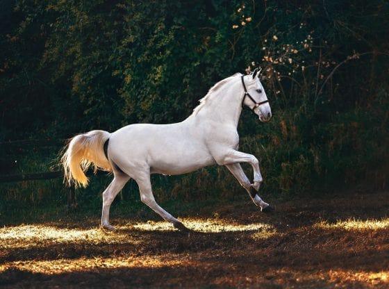 Rêver de chevaux signification